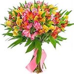 Alstroemeria - flowers and bouquets on roza.kharkov.ua