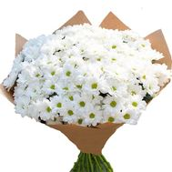 31 chamomile in bouquet - flowers and bouquets on roza.kharkov.ua