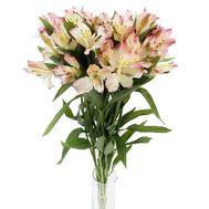 7 альстромерий в букете - цветы и букеты на roza.kharkov.ua