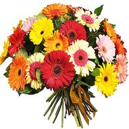 Large bouquet of gerberas - flowers and bouquets on roza.kharkov.ua
