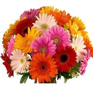 Wonderful bouquet of gerberas - flowers and bouquets on roza.kharkov.ua