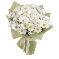 Buy camomiles Kharkov - flowers and bouquets on roza.kharkov.ua