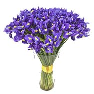 101 iris in a bouquet - flowers and bouquets on roza.kharkov.ua
