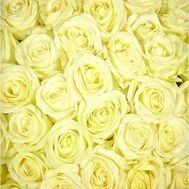 White roses per piece - flowers and bouquets on roza.kharkov.ua