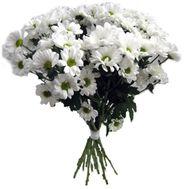 Букет из ромашек - цветы и букеты на roza.kharkov.ua