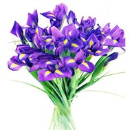 Bouquet of blue irises - flowers and bouquets on roza.kharkov.ua