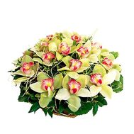Basket of flowers from orchids - flowers and bouquets on roza.kharkov.ua