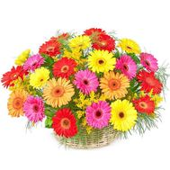 Basket of gerberas - flowers and bouquets on roza.kharkov.ua