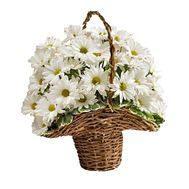 Chrysanthemum Basket - flowers and bouquets on roza.kharkov.ua