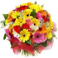 Купить герберы - цветы и букеты на roza.kharkov.ua