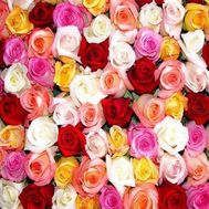 Multicolored roses by the piece - flowers and bouquets on roza.kharkov.ua