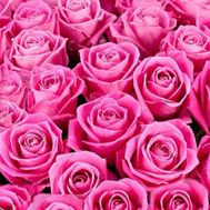 Pink roses per piece - flowers and bouquets on roza.kharkov.ua