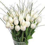 Tulips - flowers and bouquets on roza.kharkov.ua