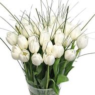 Тюльпаны - цветы и букеты на roza.kharkov.ua