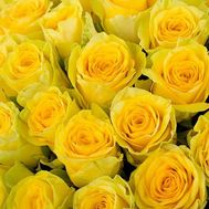 Yellow roses per piece - flowers and bouquets on roza.kharkov.ua