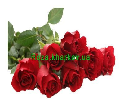 """Bouquet of imported meter roses"" in the online flower shop roza.kharkov.ua"