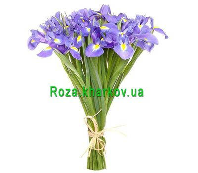 """""""Красивый букет ирисов"""" в интернет-магазине цветов roza.kharkov.ua"""