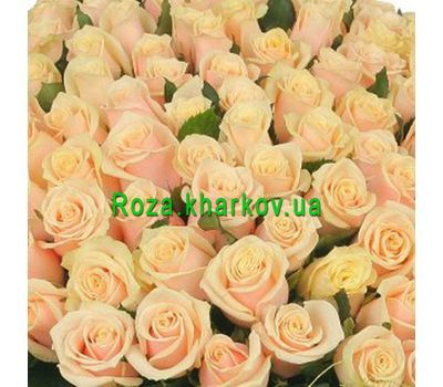 """Cream roses per piece"" in the online flower shop roza.kharkov.ua"