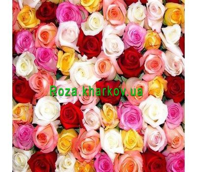 """Multicolored roses by the piece"" in the online flower shop roza.kharkov.ua"