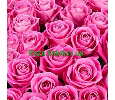 """Pink roses per piece"" in the online flower shop roza.kharkov.ua"